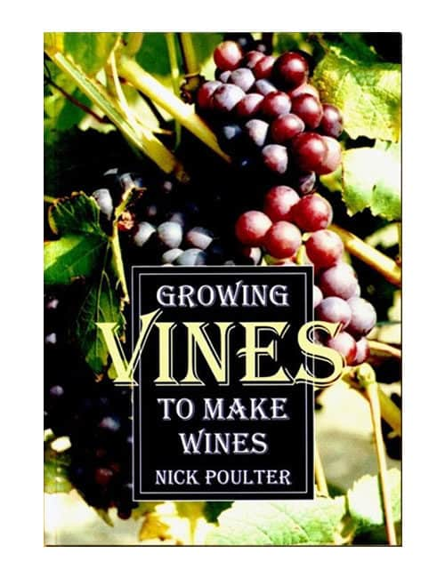 growing vines to make wines
