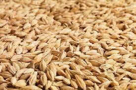 beer grain